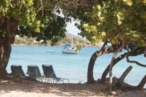 sailboat thru trees